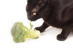 gatto puo mangiare i broccoli