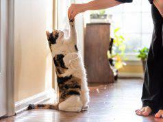 addestrare gatto