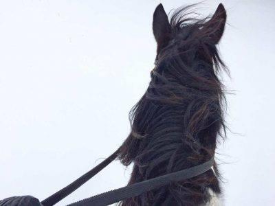 cavallo vento nervoso