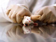 test animali droghe