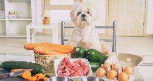 proteine cane alimenti