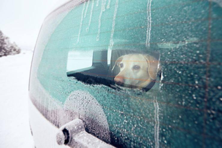 cane macchina inverno