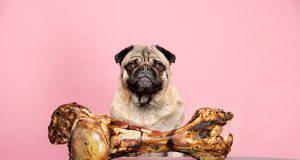 quanta carne al cane