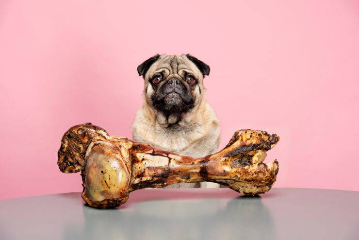 quantità carne cane