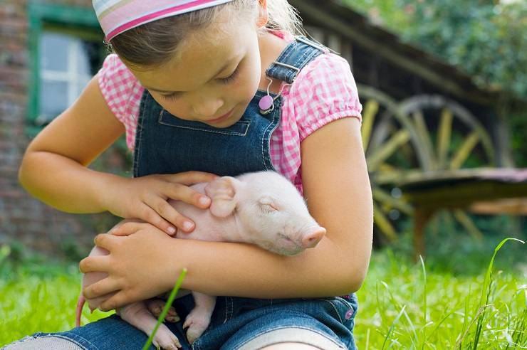 minori violenti animali