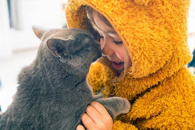 adottare un gatto adulto