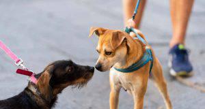 Incontri per strada tra cani