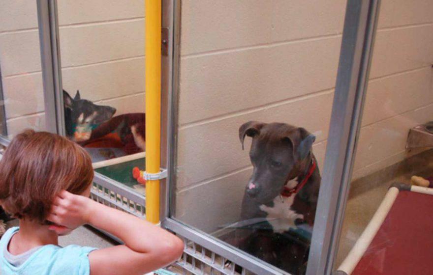 animali rifugi bambini