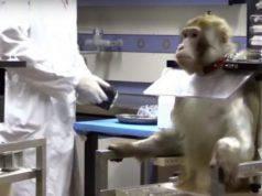 sperimentazione animali telethon