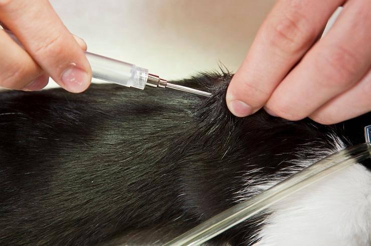 obbligo microchip gatti