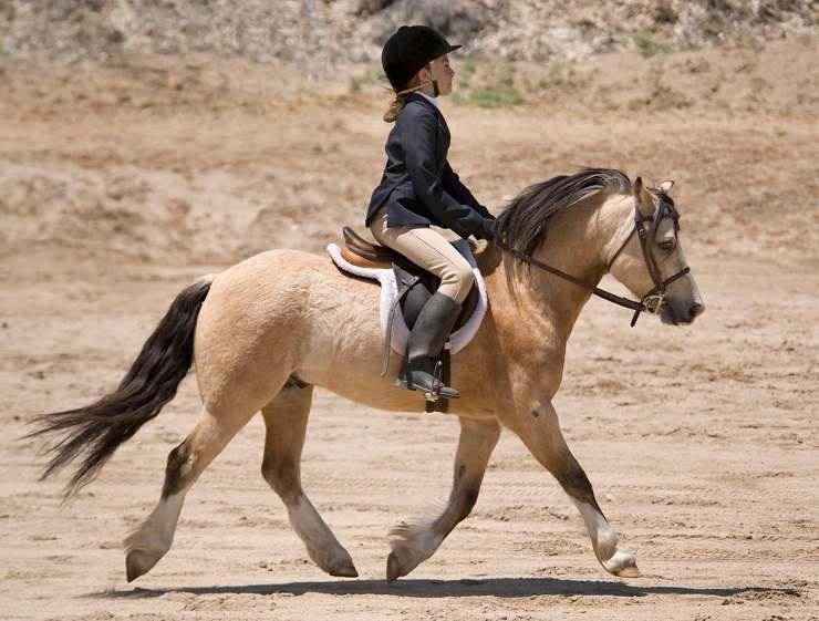postura a cavallo monta inglese