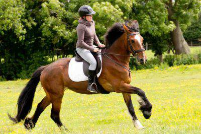 equitazione abbigliamento cavallo