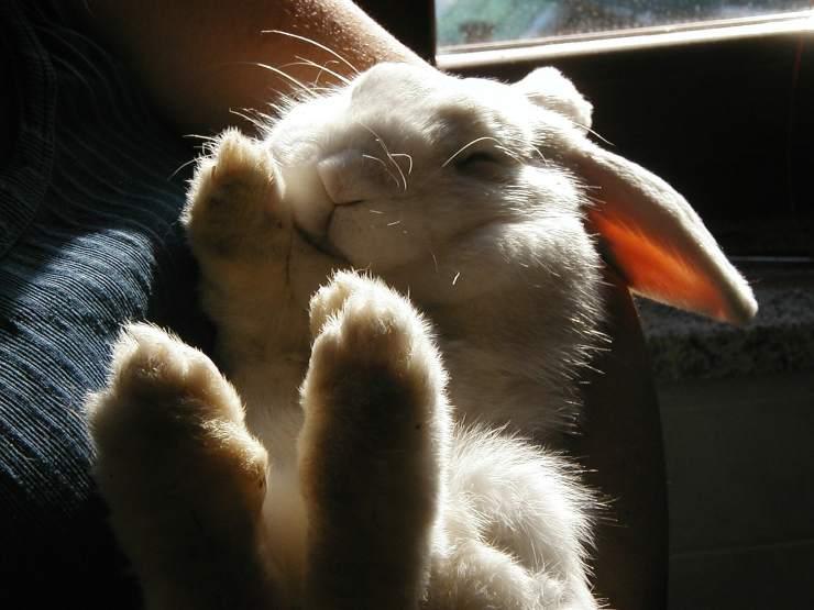 coniglio paura