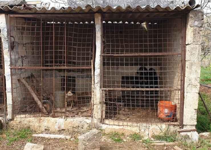 detenzione cani non idonea