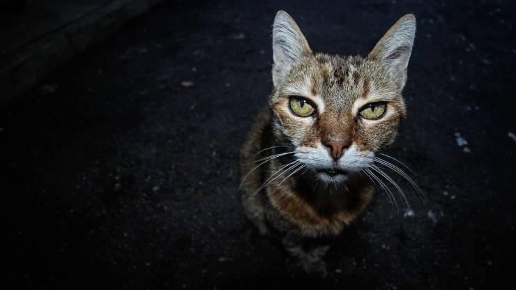 Gatto esce di notte