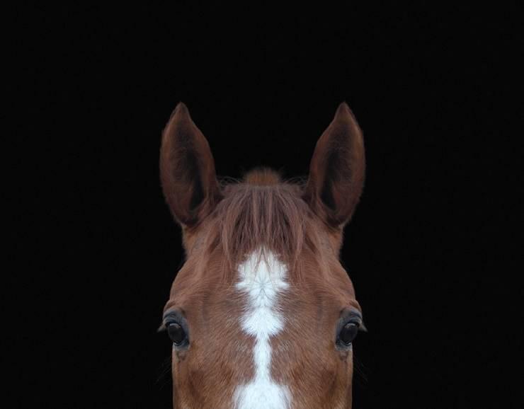 udito del cavallo