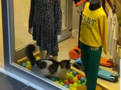 gatto palline