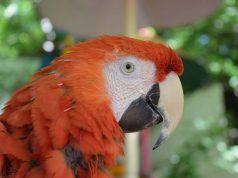 proteggere i pappagalli dal freddo