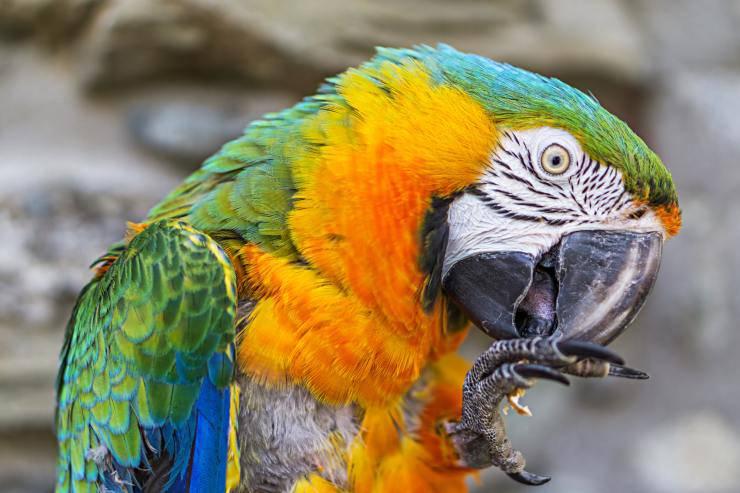 aspergillosi nel pappagallo