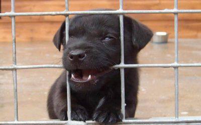 canile cani