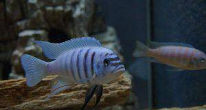 curiosita sui pesci