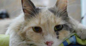 controlli veterinari gatto