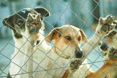 canile chiusura cani