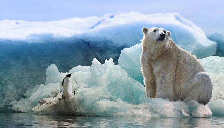 pinguino e orso