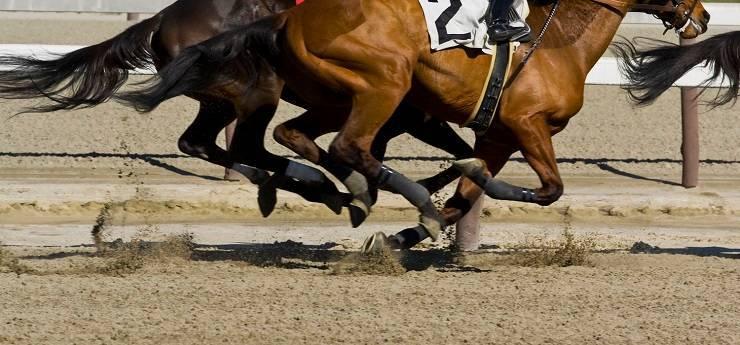 cavalli più veloci