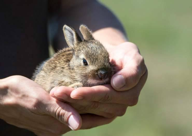 La dolcezza del coniglio (Foto Pixabay)