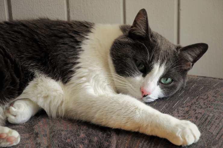 ustioni scottature gatto