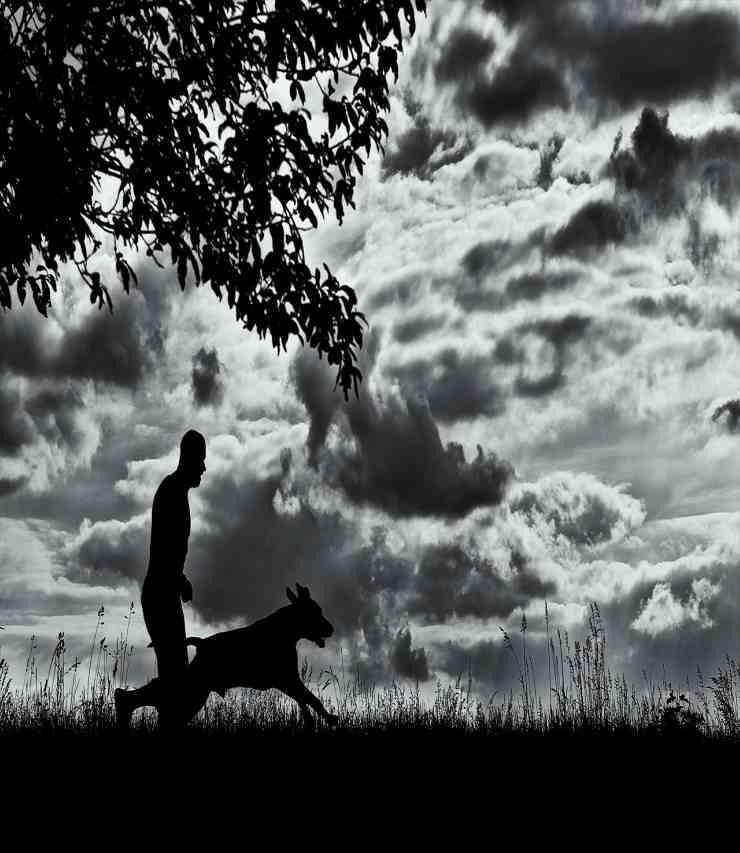 Cane e padrone sempre vicini (Foto Pixabay)
