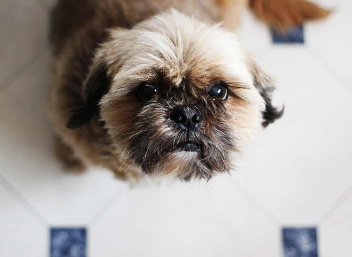 cane aspirapolvere