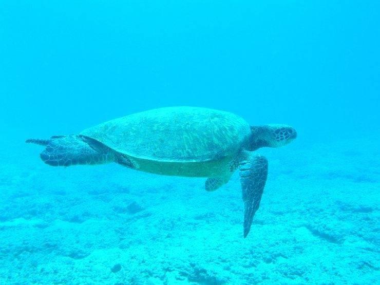 senso di orientamento della tartaruga marina