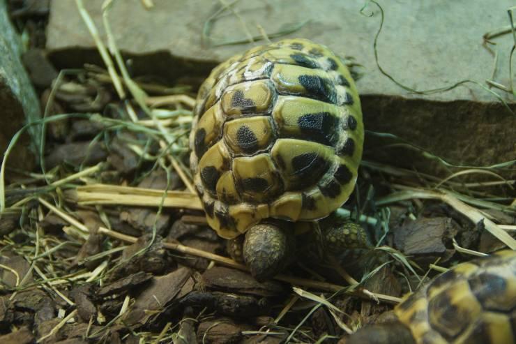 tartaruga terrario