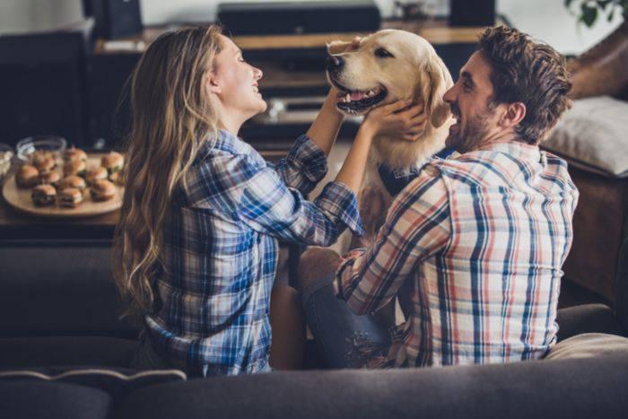 Cane geloso del rapporto di coppia