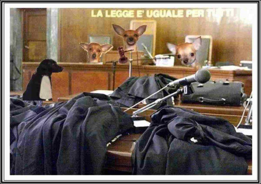 tribunale per gli animali