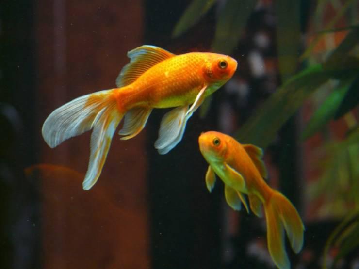 pesci malati