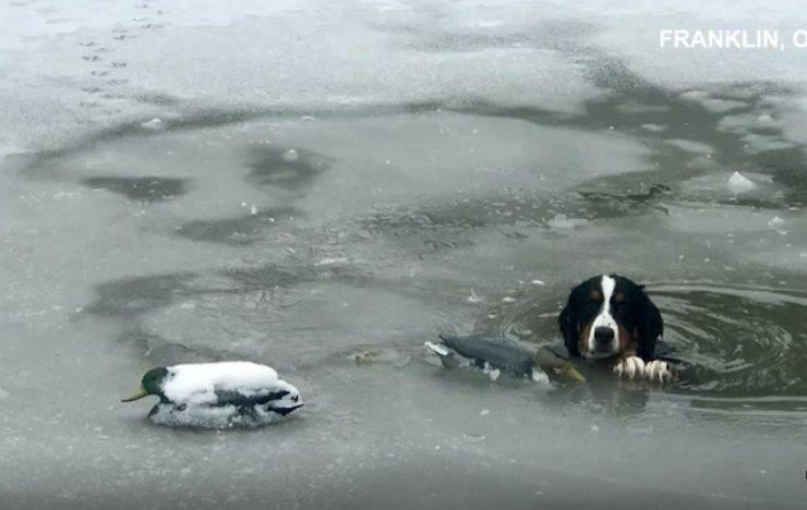 cane pericolo fiume ghiacciato