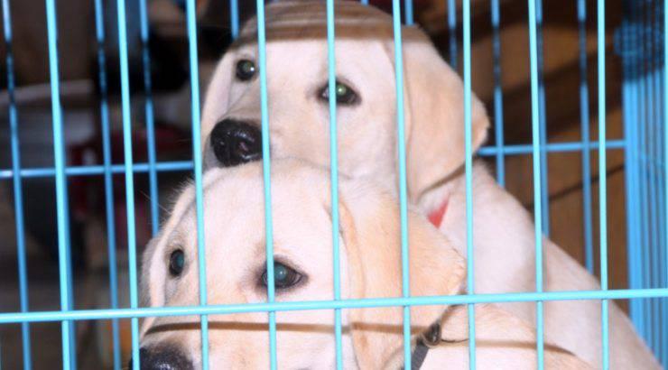 maltrattamenti animali rifugio