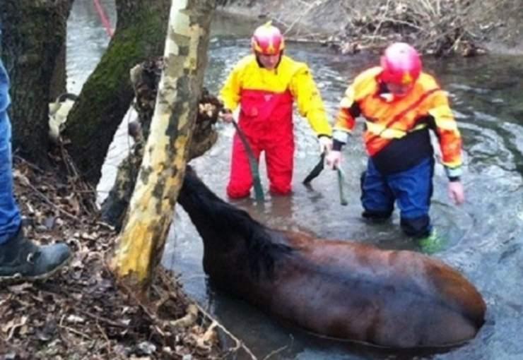 cavallo caduto canale