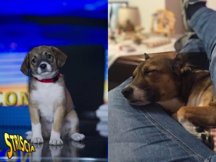 che fine hanno fatto cani striscia la notizia