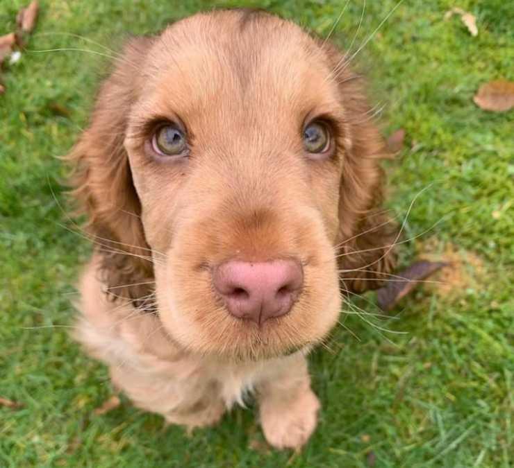 La cagnolina amorevole (Foto Instagram)