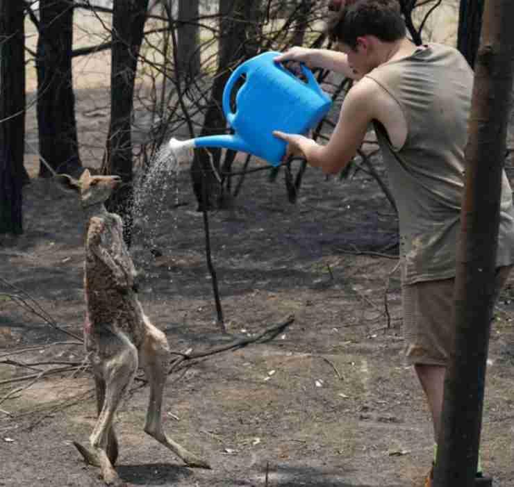 Tanta acqua per il canguro (Foto di dominio pubblico)