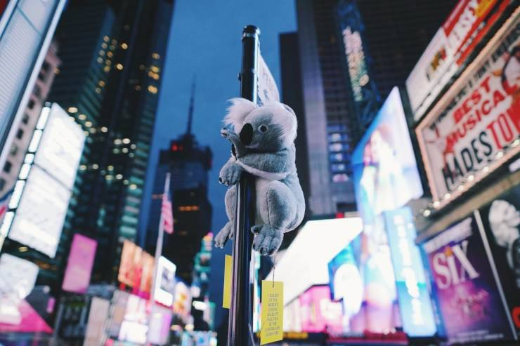 peluche koala new york