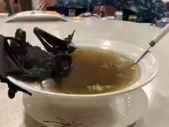 Il pipistrello nella ciotola in Cina (Foto di dominio pubblico)