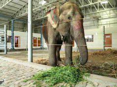 Elefante in India (Foto Facebook)