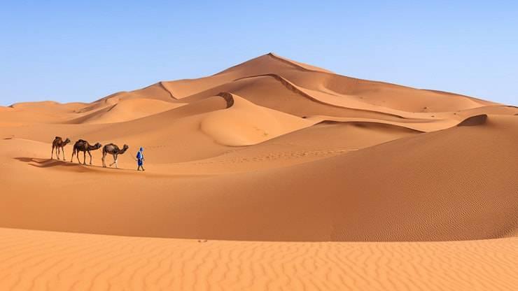 Color cammello