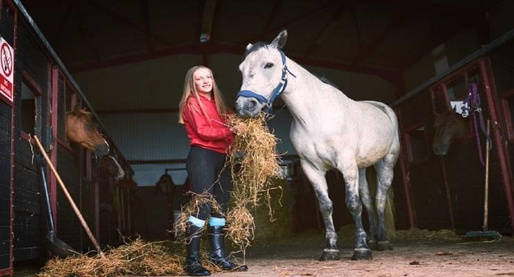 Quanto costa mantenere un cavallo