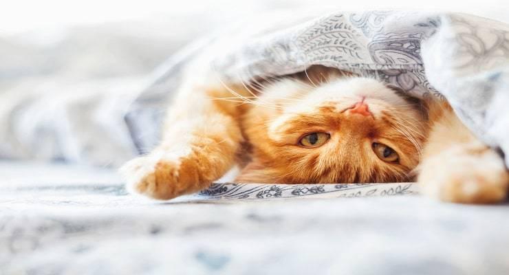 nomi di gatti con la E (Foto iStock)